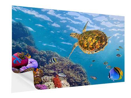 Klebeposter Die Wasserschildkröte