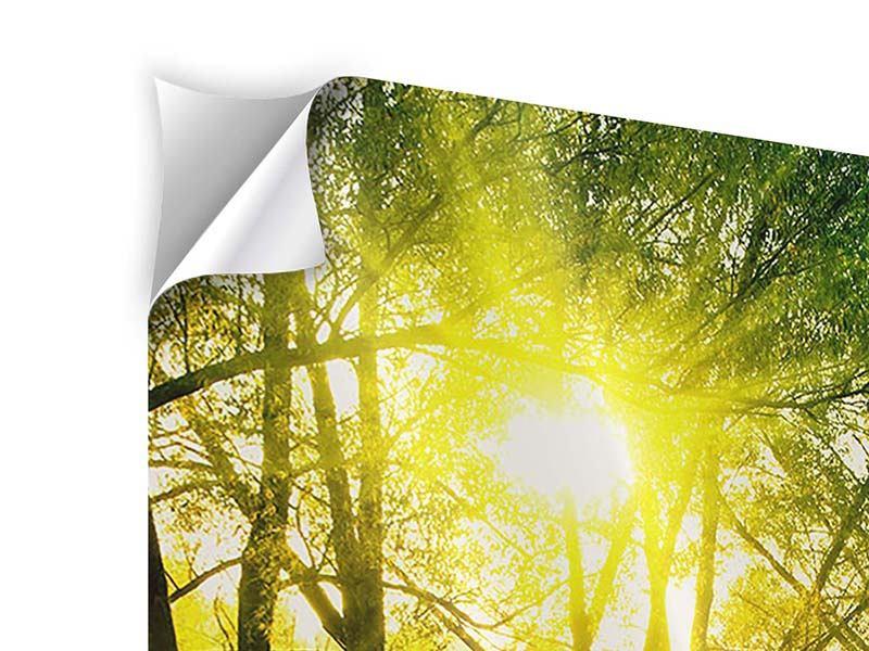 Klebeposter Waldweg im Sonnenlicht