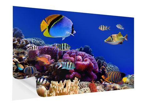 Klebeposter Welt der Fische