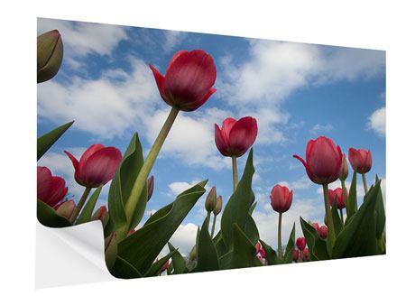 Klebeposter Tulpen im Himmel