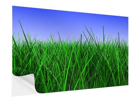 Klebeposter Im Gras
