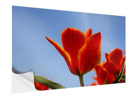 Klebeposter Rote Tulpen in XXL