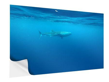 Klebeposter Der Walhai