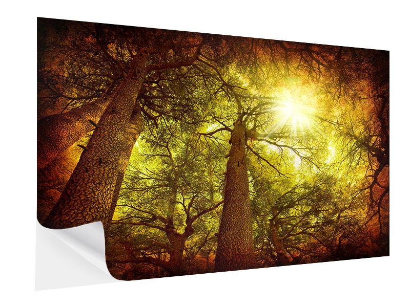 Klebeposter Cedar Baum