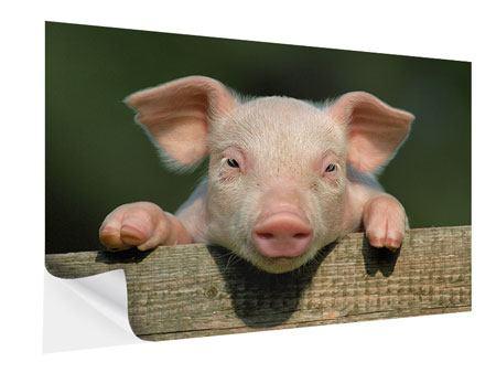 Klebeposter Schweinchen Namens Babe