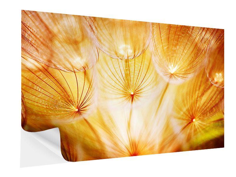 Klebeposter Close Up Pusteblume im Licht