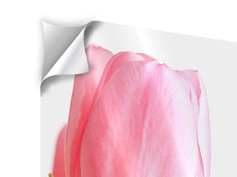 Klebeposter XXL Tulpe