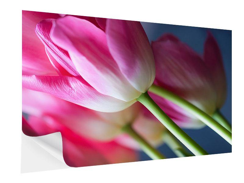 Klebeposter Makro Tulpen