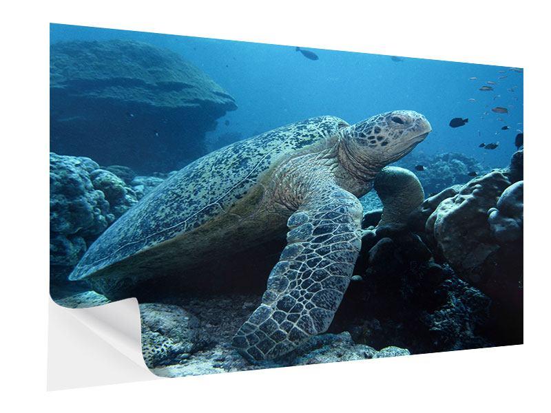 Klebeposter Die Meeresschildkröte