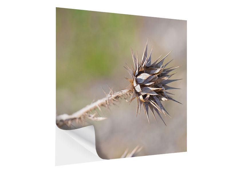Klebeposter Die Wüstenblume