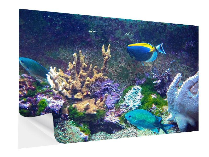 Klebeposter Fische