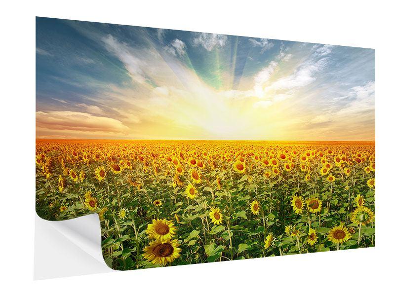 Klebeposter Ein Feld voller Sonnenblumen