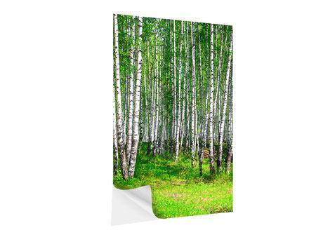 Klebeposter Der Birkenwald im Sommer