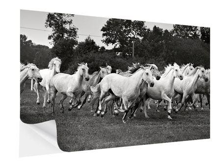 Klebeposter Die Mustang Herde