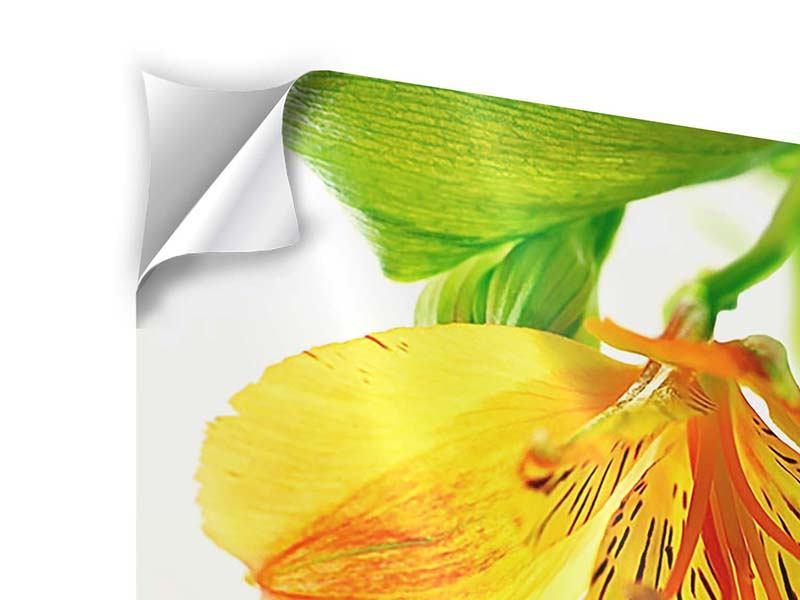 Klebeposter Fliessende Orchideenblüte
