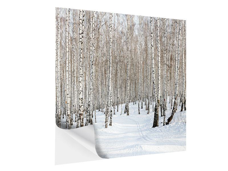 Klebeposter Birkenwald-Spuren im Schnee