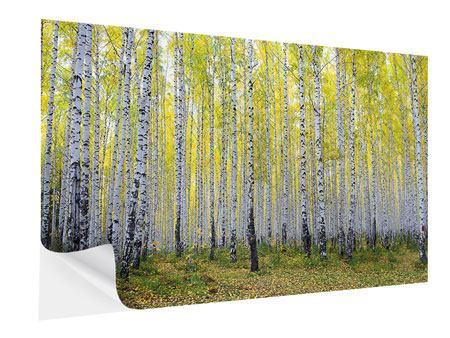 Klebeposter Herbstlicher Birkenwald
