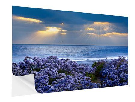 Klebeposter Der Lavendel und das Meer