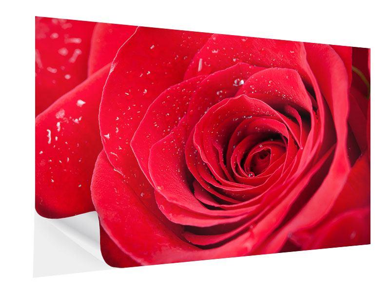 Klebeposter Rote Rose im Morgentau