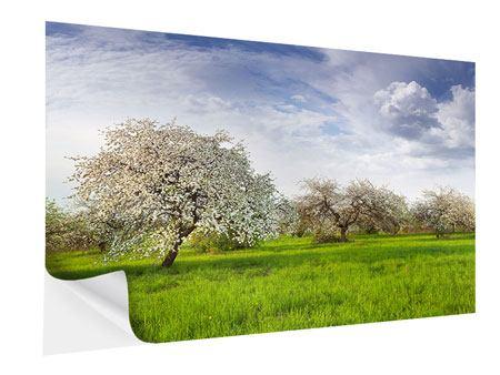 Klebeposter Apfelbaum-Garten