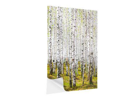 Klebeposter Der Birkenwald im Frühling