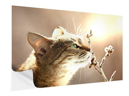 Klebeposter Die Katze