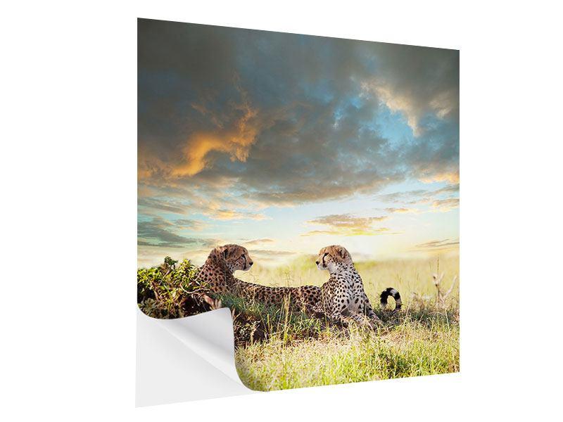 Klebeposter Geparden