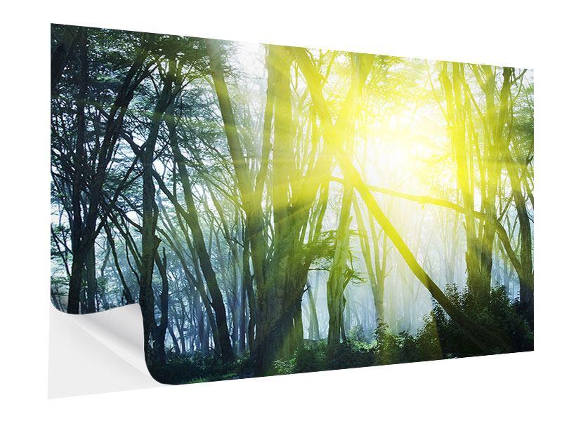 Klebeposter Sonnenstrahlen im Wald