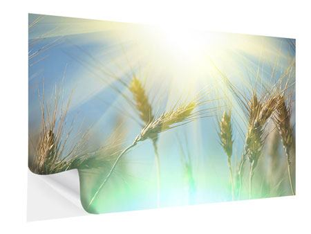 Klebeposter König des Getreides