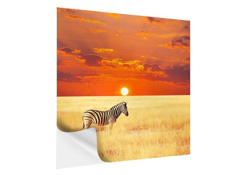 Klebeposter Zebra im Seregenti-Nationalpark