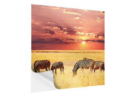 Klebeposter Zebras in der Savanne