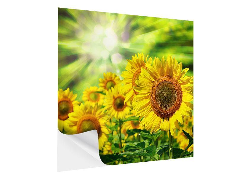 Klebeposter Die Sonne und die Blumen