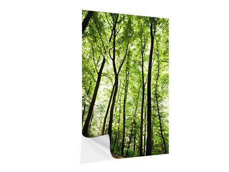 Klebeposter Wald