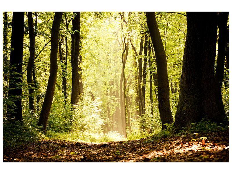 Klebeposter Sonnenaufgang im Wald