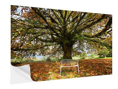 Klebeposter Mein Lieblingsbaum