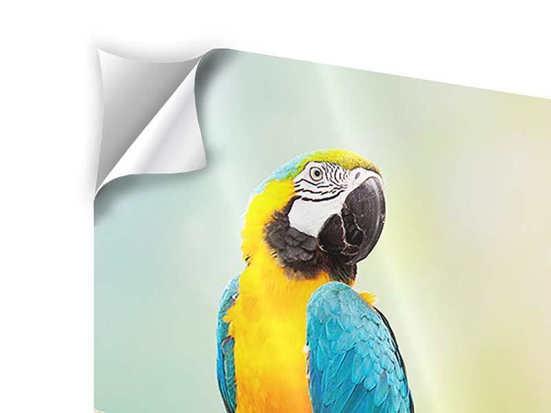 Klebeposter Der Papagei