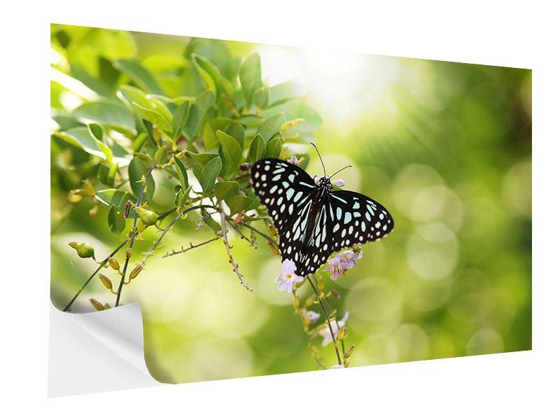 Klebeposter Papilio Schmetterling XXL