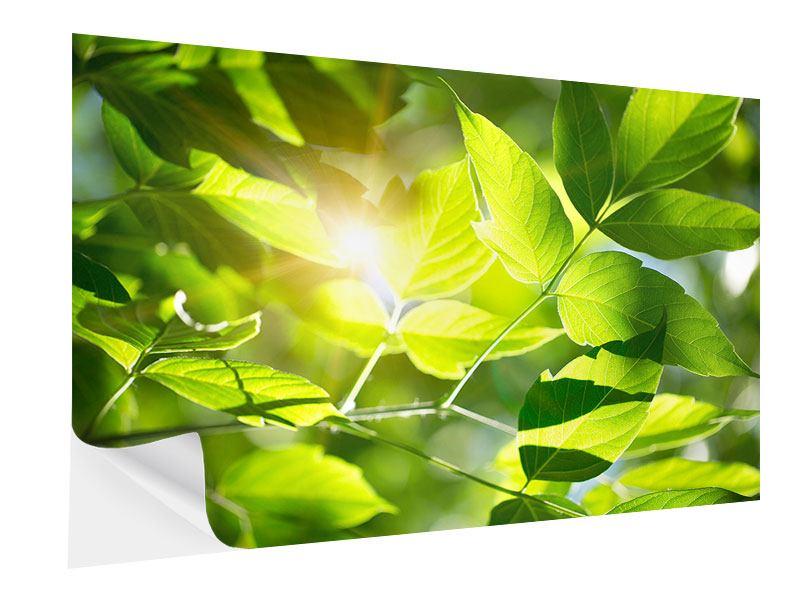 Klebeposter Es grünt so grün