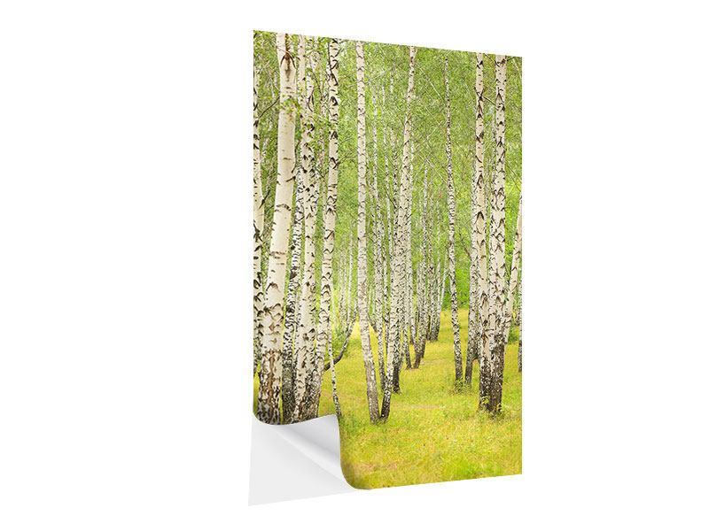 Klebeposter Der Birkenwald im Spätsommer