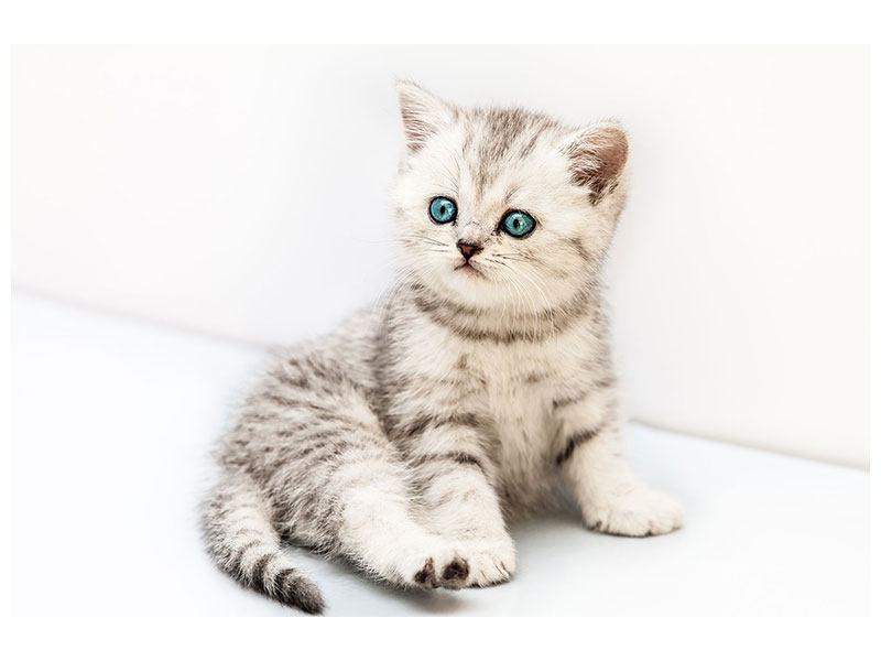 Klebeposter Katzenbaby