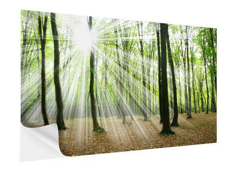Klebeposter Magisches Licht in den Bäumen