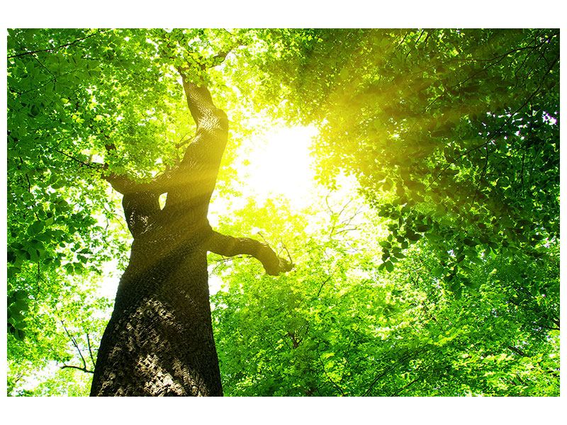 Klebeposter Baum