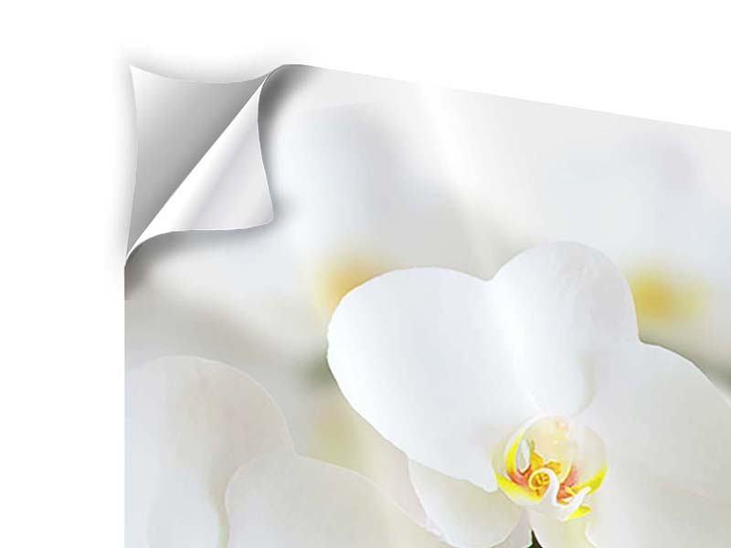 Klebeposter Weisse Orchideen