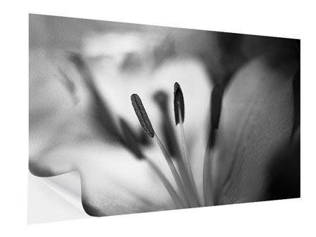 Klebeposter Makro Lilienblatt