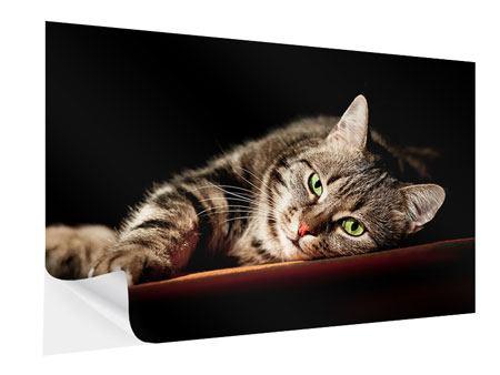 Klebeposter Entspannte Katze