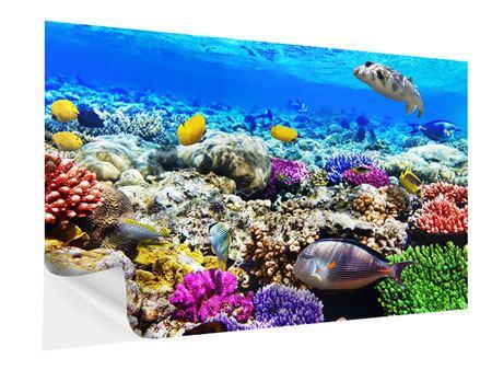 Klebeposter Fischaquarium