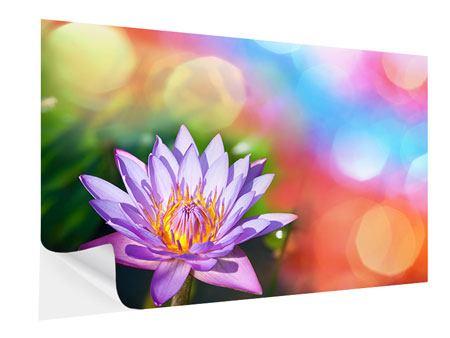 Klebeposter Colored Lotus
