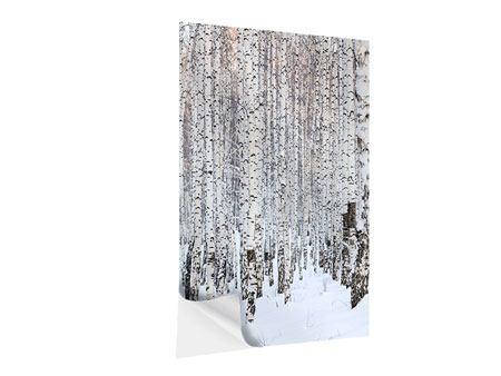 Klebeposter Der Birkenwald im Winter