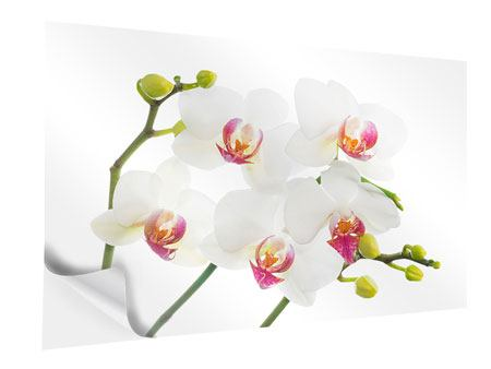 Klebeposter Orchideenliebe