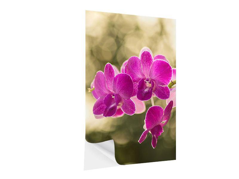 Klebeposter Orchideen Violett